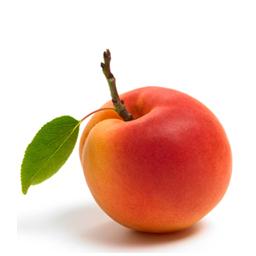 Die Aprikose