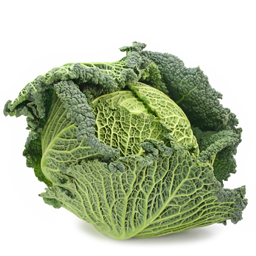 Savoy cabbage of Brittany
