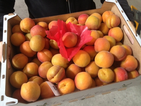 EXTRA APRICOTS 5Kg