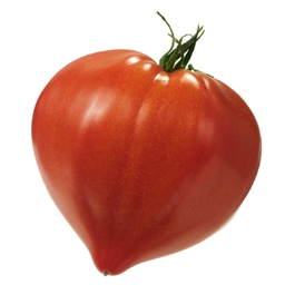 Fruits tomate kampexport - Cuisiner le coeur de boeuf ...