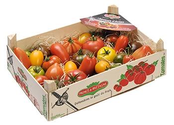 Tomatoes | Kampexport